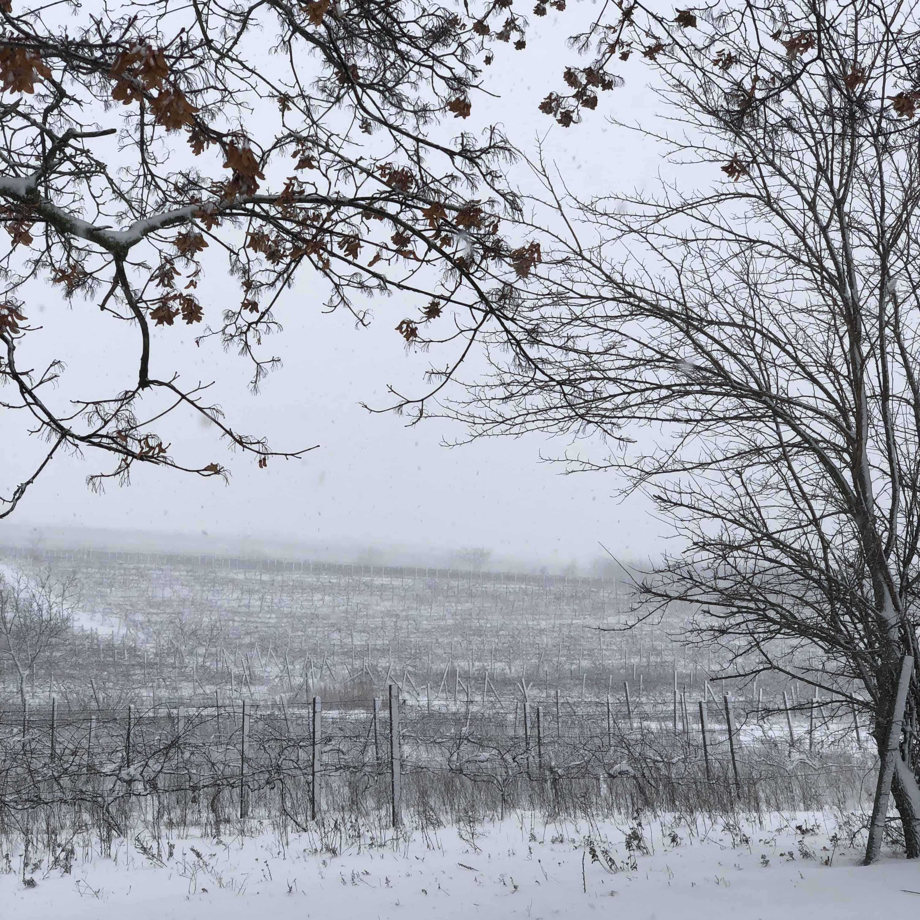 Weinberge Moldawien Winter