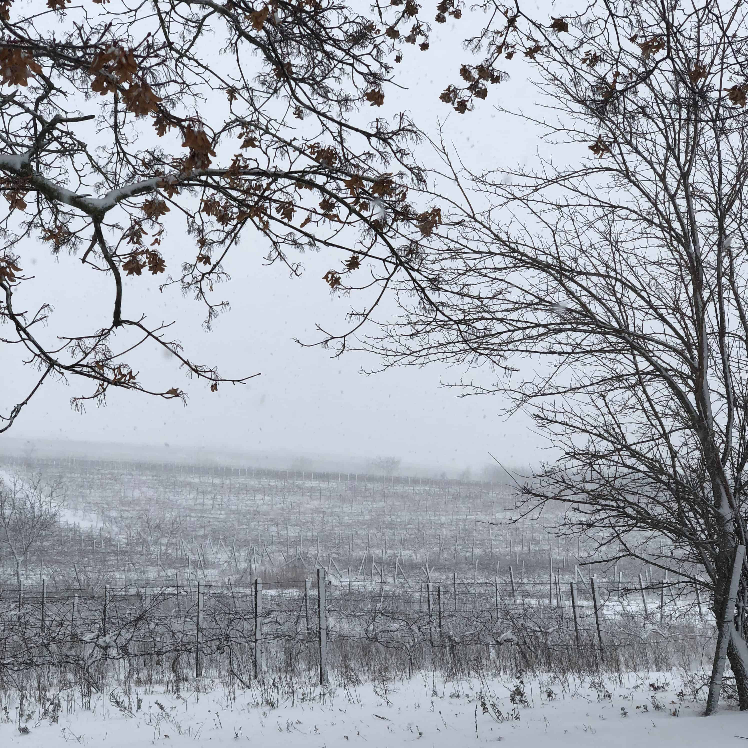 Winnice, wina, Mołdawia, enoturystyka