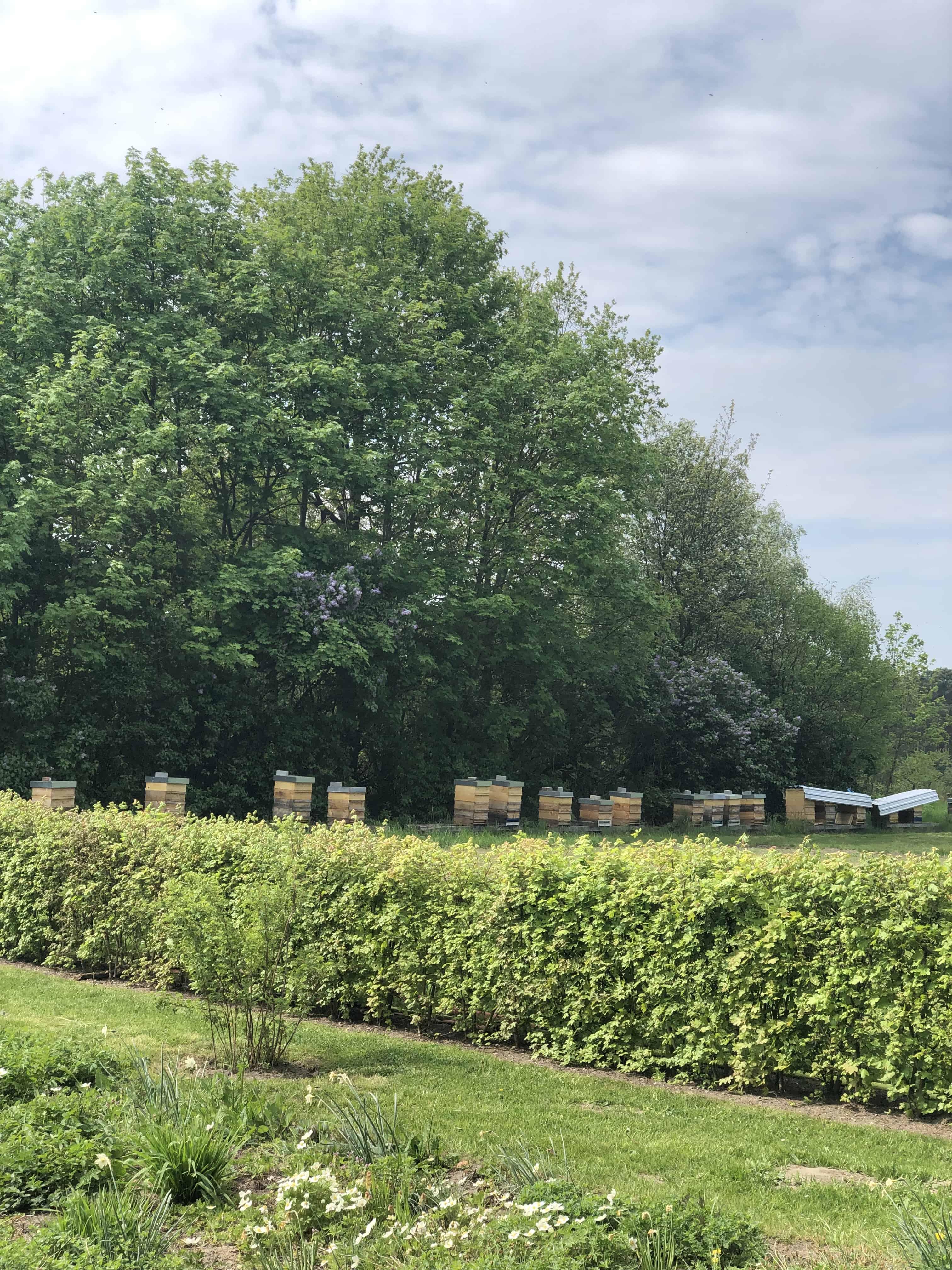 Botanischer Garten Italien Gardasee: Bienenhäuser Botanischer Garten Berlin Pankow