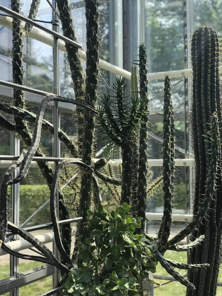Kakteen Gewächshaus Botanischer Garten Pankow