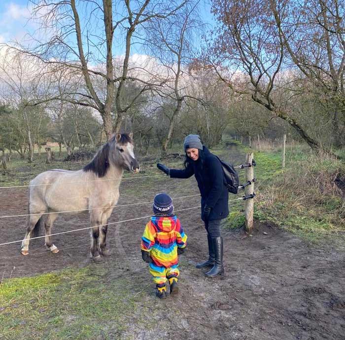 Konik polski dzikie konie Hobrechtsfelde koło Berlina